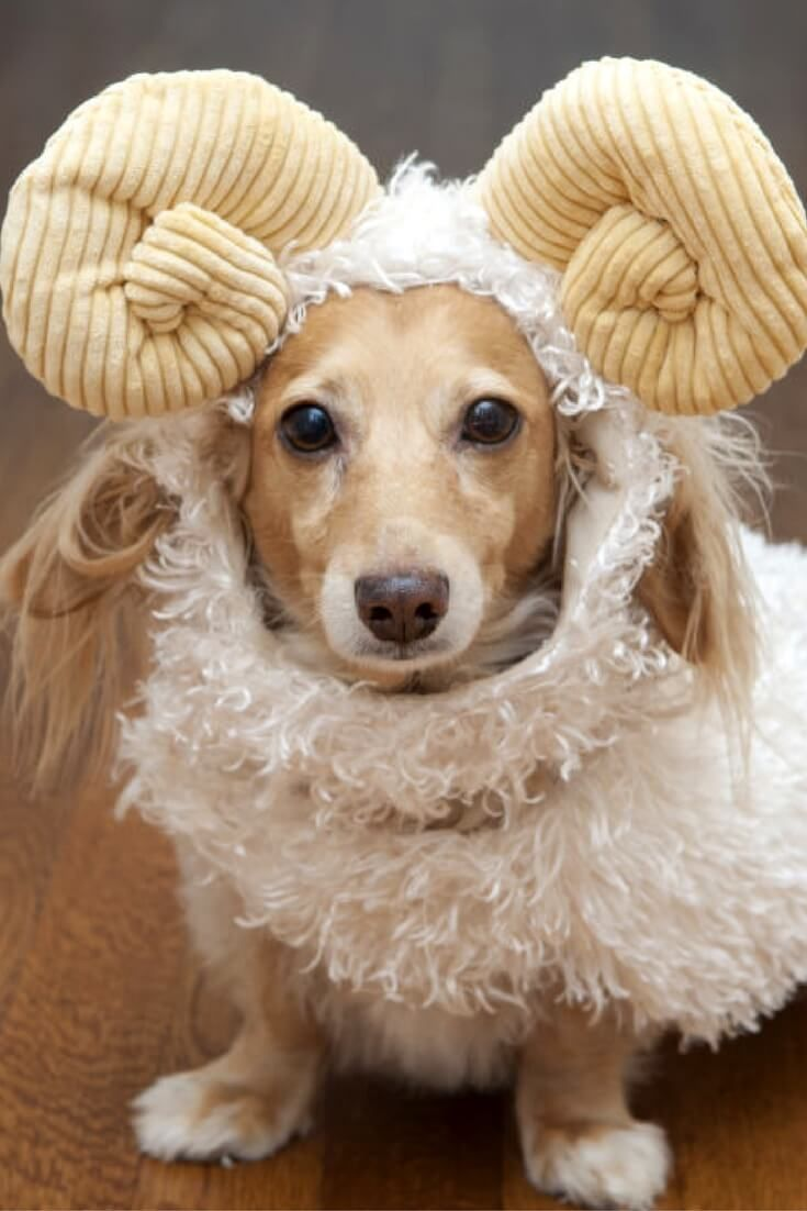 23 Unbelievable Halloween Costume Ideas For Your Dog Dog
