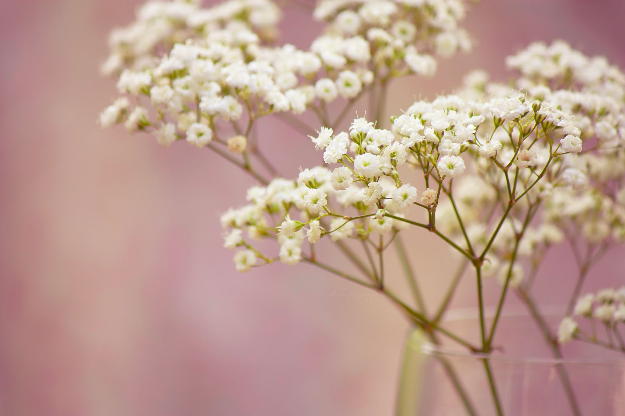 Branch babys breath flowers white small mics pics pinterest branch babys breath flowers white small mightylinksfo Choice Image
