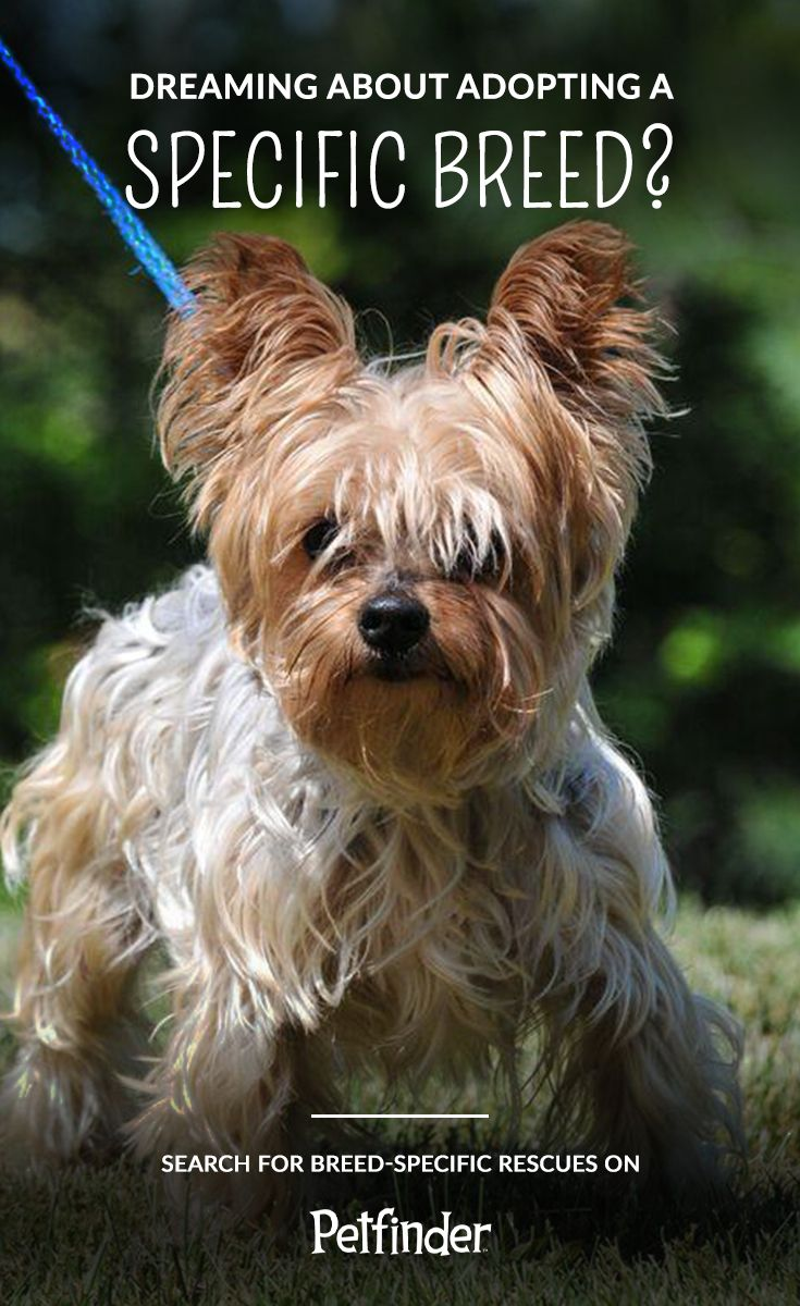 Five Common Misconceptions About Pet Adoption Adoption Pet Adoption Pets