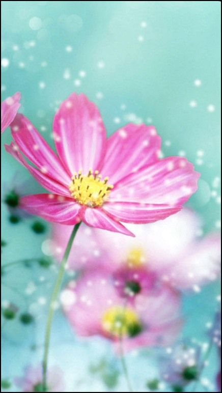 Fondos Para Celular De Flores Fondos Cel En 2019 Flower Iphone
