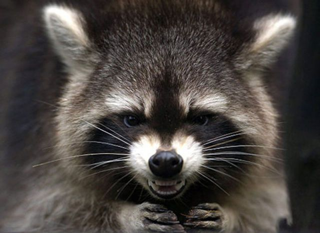 Angry Animals Google Search: ... Angry Animals. Anyway They