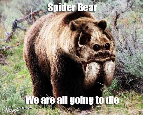 Spider Bear We Are All Going To Die Spiders Bears Scary