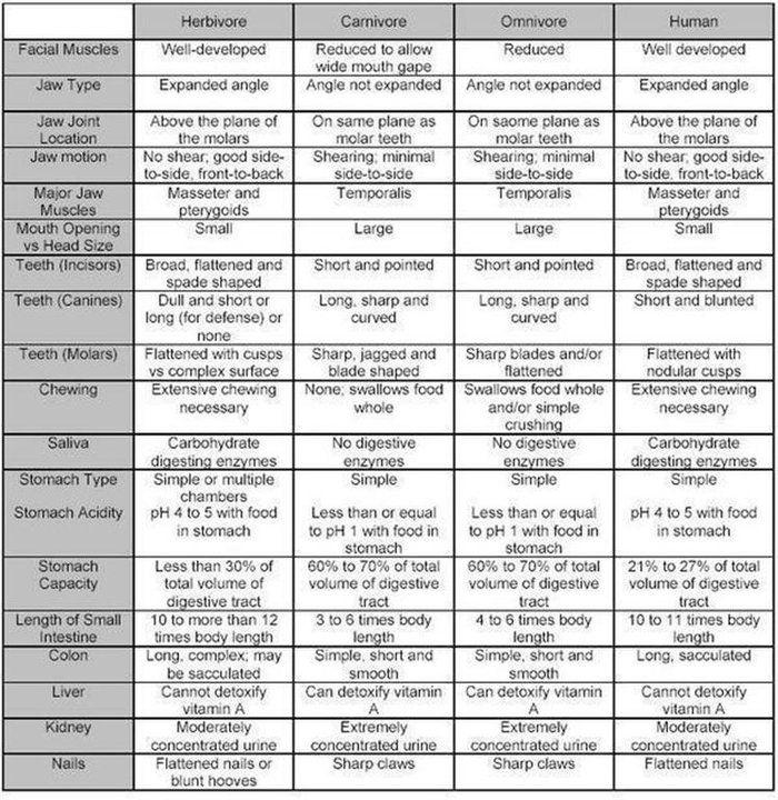 comparison herbivore, carnivore, omnivore. Human teeth