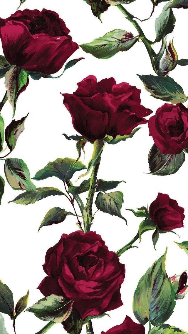 Pin De Sana Em Flowers Rosas Papel De Parede Papel De Parede Flores Wallpaper De Tela