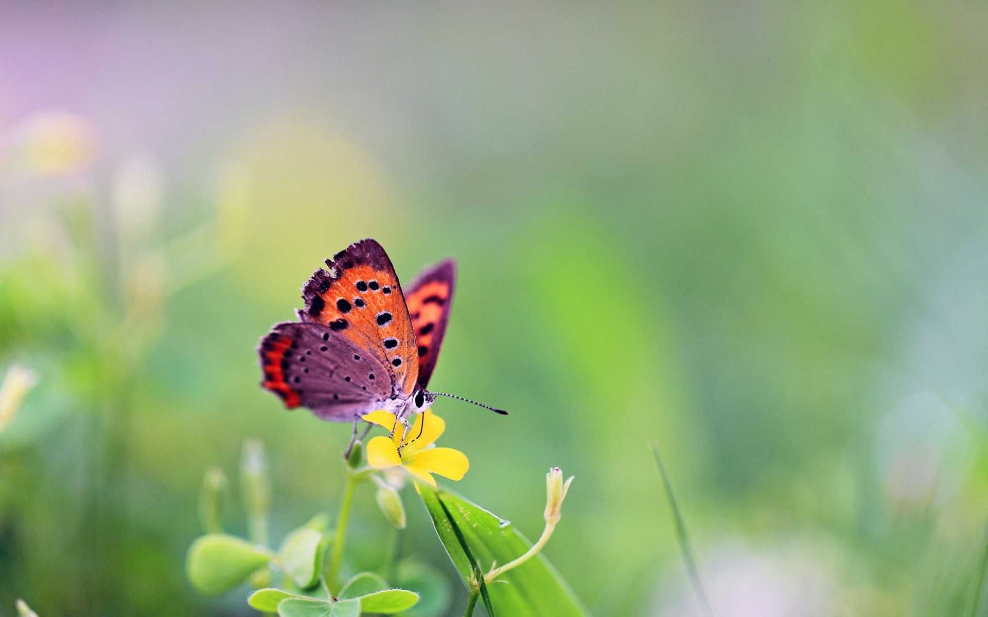 cute butterfly backgrounds 1024×768 cute butterfly backgrounds (36