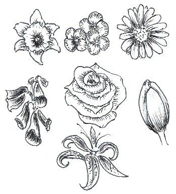 Learn to draw flowers tutorial drawing illustration for Easy flower drawing tutorials