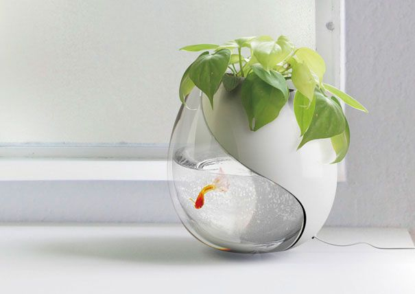 planter / fish bowl