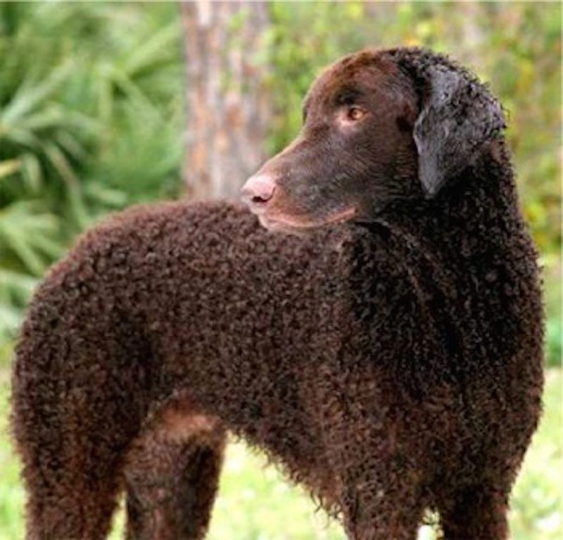 Sporting Dogs List Of All Sporting Dog Breeds Sporting Dogs