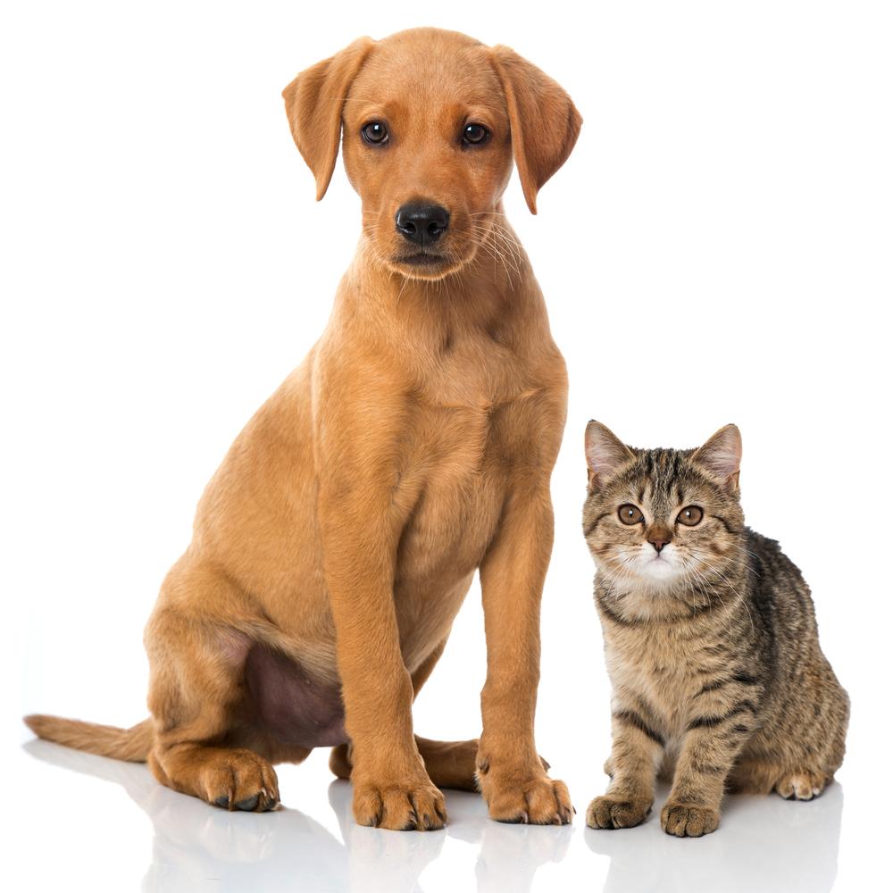 Cat Dog Dog Sitting Dog Quotes Rich Dog