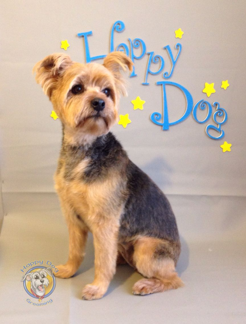 Pin On Happy Dog Pet Grooming