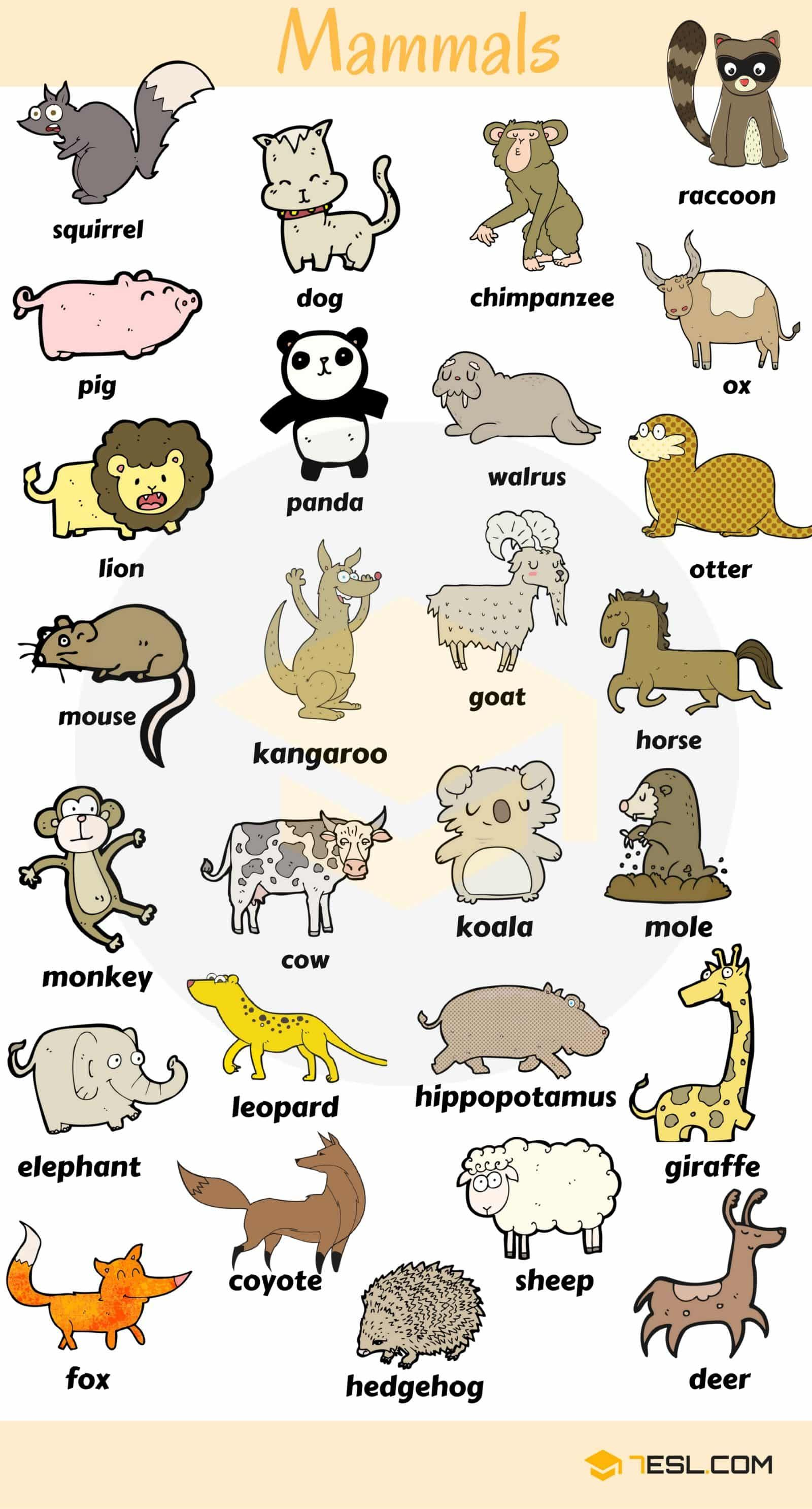 Learn Mammals Vocabulary In English Through Pictures Eslbuzz Learning English Animals Name In English English Vocabulary Learn English