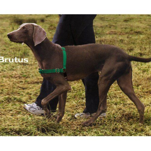 19 07 26 99 Easy Walk Harness Small Medium Green The Premier Easy Walk Harness Not Only Lets You Take Easy Walk Dog Harness Easy Walk Harness Dog Harness