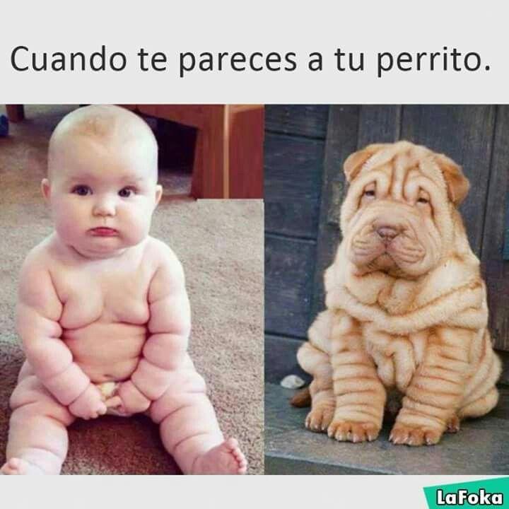 Imagenes Chistosa Sabore Perritos Arrugados Bebes Adorables Memes Divertidos Sobre Perros Humor Divertido Sobre Animales Memes De Perros Chistosos