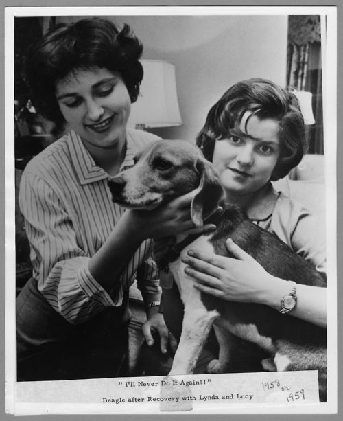 January 14 1959 The Johnsons Dog Little Beagle Johnson Is
