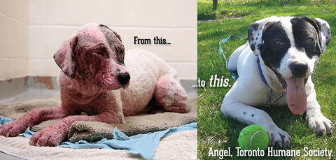 Angel Had The Worst Case Of Mange Toronto Humane Society Had Ever