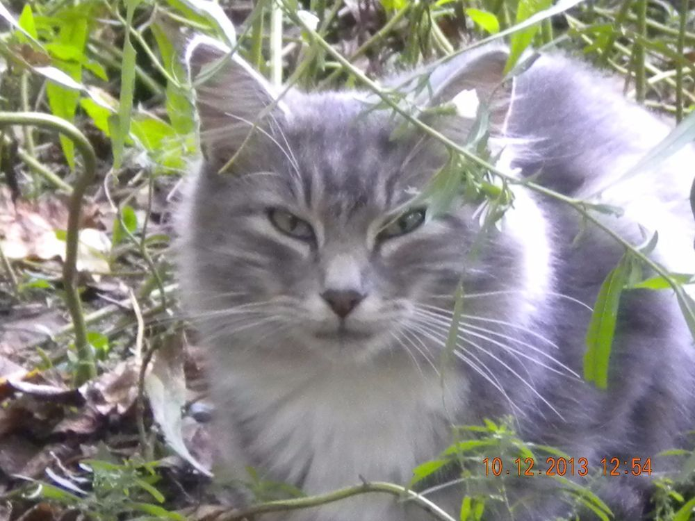 SPONSOR FERAL CAT CASSIE IN MEMORY OF RAINBOW BRIDGE VET