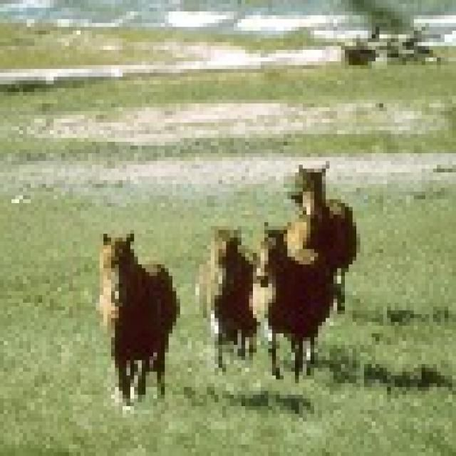 Where to See Coastal Wild Horses: Cumberland Island National Seashore - Georgia