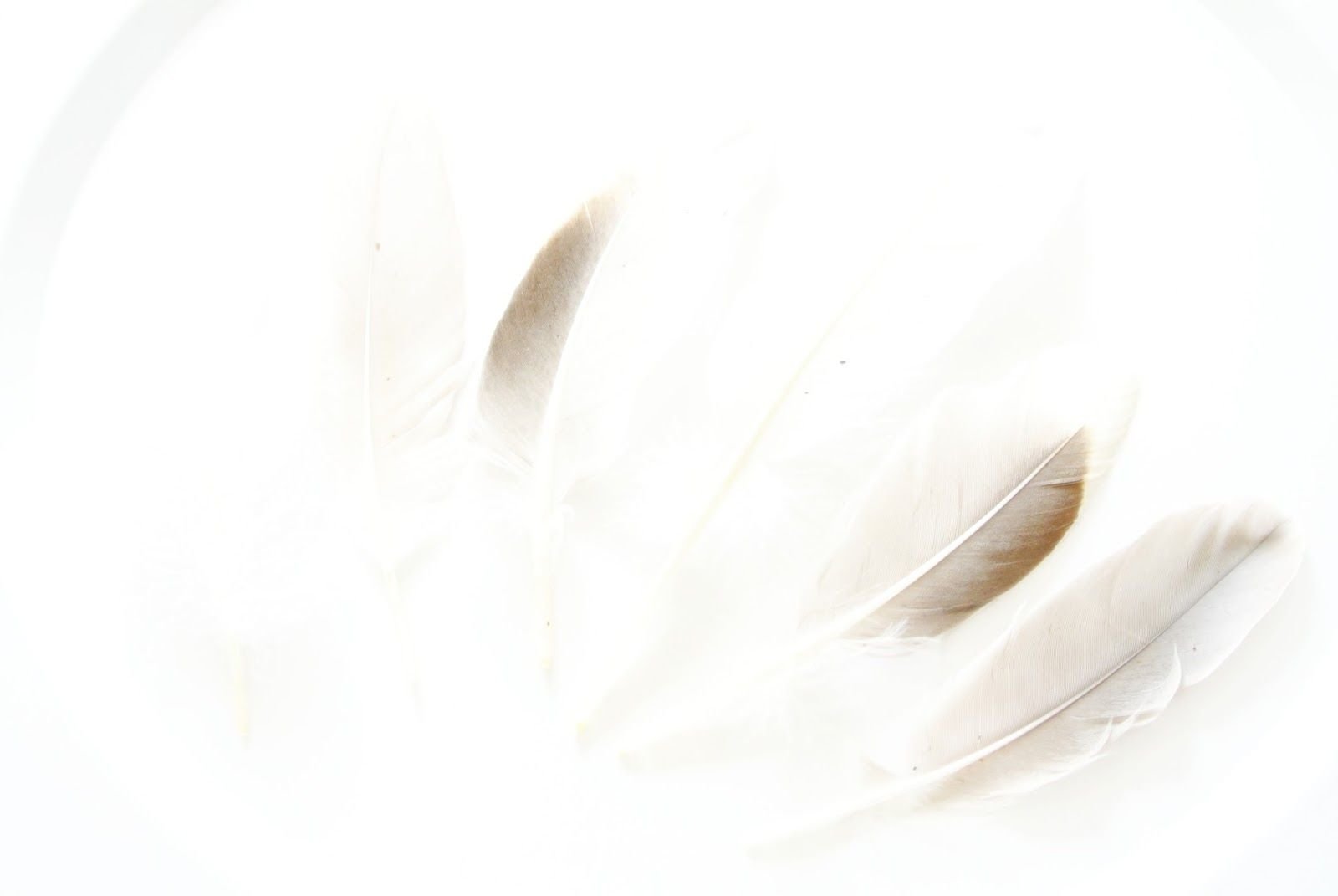 More feathers on charlysstyleoflife.blogspot.nl