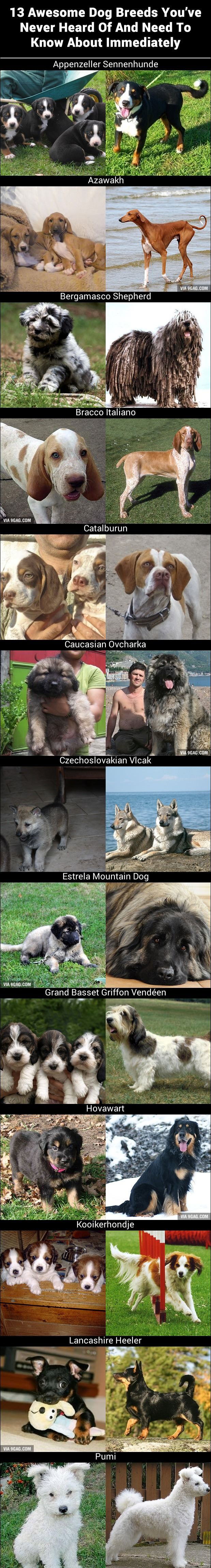 awesome dog breeds youuve never heard of dog types pinterest