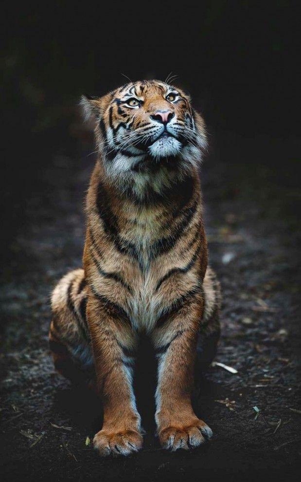 Эмоции животных | Животные, Кошачьи фотографии, Милые ...