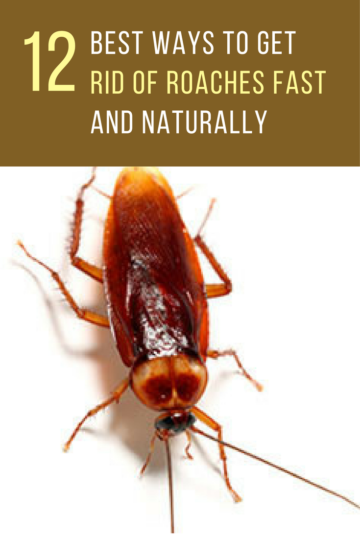 12 Best Ways To Get Rid Of Roaches Fast Ideahacks Com Pest Control Roaches Kill Roaches Naturally Roaches