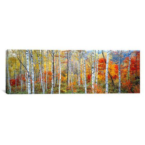 Found it at Wayfair - Panoramic Fall Trees, Shinhodaka, Gifu, Japan Photographic Print on Canvas