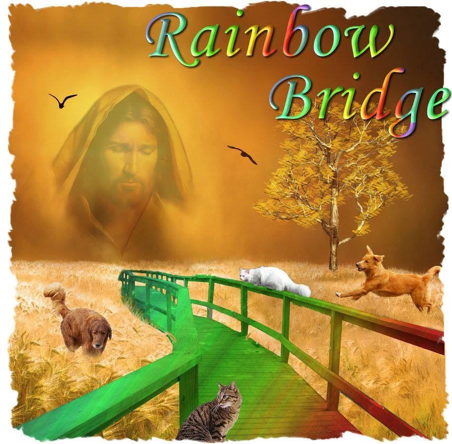 Animal Quotes, Animal Rights & Religions's photo: Rainbow ...