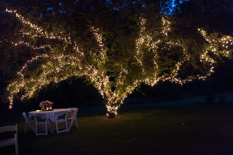 Enchanted forest wedding, farm wedding, decorations, rustic, twinkle lights, lights, tree, shine