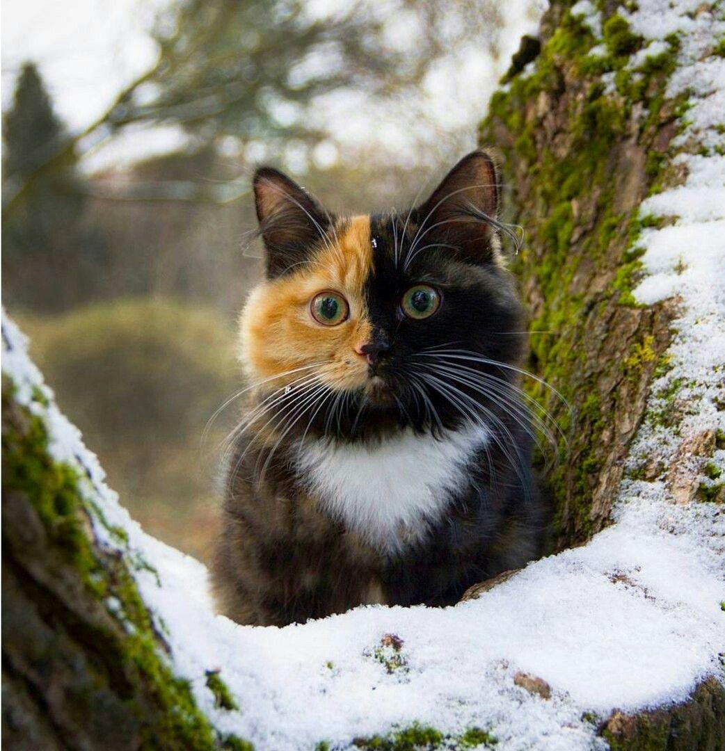 Pin Von Anna Auf Tiere Katzen Tierbilder Schonen Katzen
