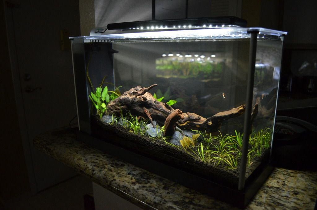 Fluval spec v aquascape aquariums pinterest for Fluval fish tank
