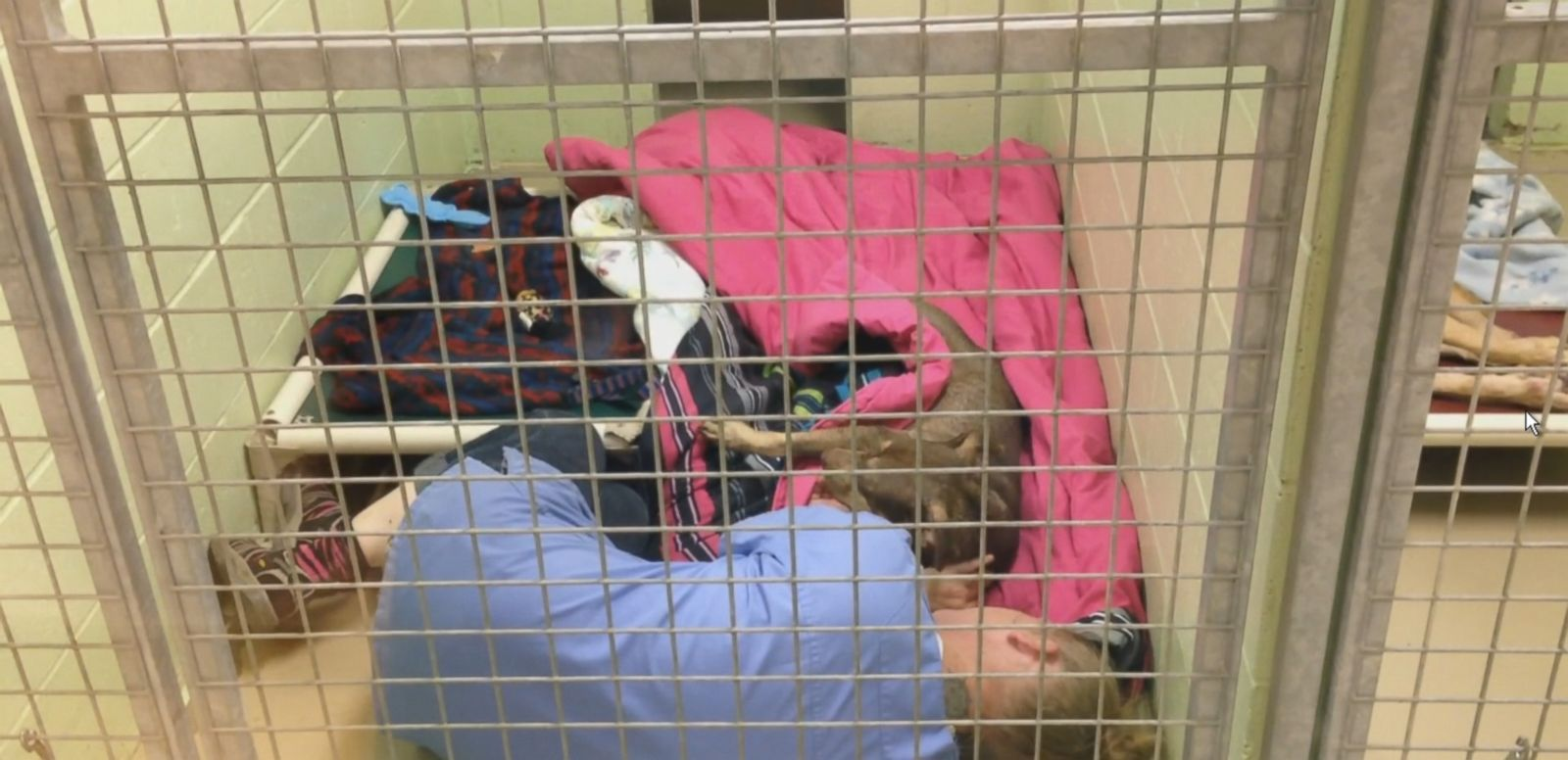 Animal Shelter Staffer Cuddles With Abandoned Dog After