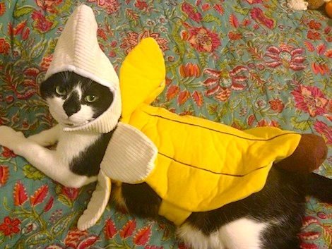 Banana Cat Halloween Costume & 105 Halloween Cat Costumes That Will Make You Smile | Pinterest ...