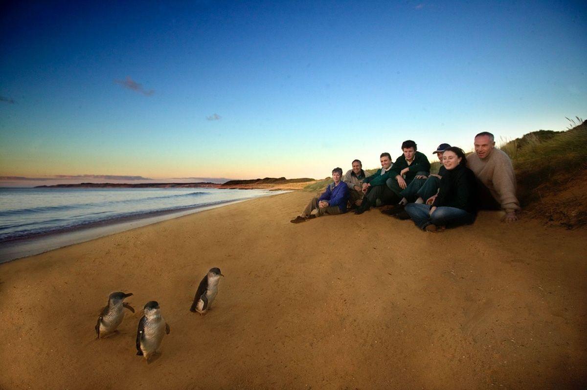 Blick ins Schlafzimmer der Pinguine von Phillip Island: http://reisegezwitscher.de/reisetipps-footer/2058-pinguine-in-australien  Auf Phillip Island tauchen bei Sonnenuntergang hunderte Zwergpinguine aus den Fluten auf...  Copyright: Phillip Island Nature Parks