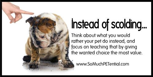 Dog Training Tip Focus On Reinforcement Dog Training Dog