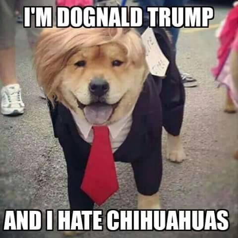 Donald Trump Meme Funny Fotos De Animales Graciosos Animales Graciosos Chistes
