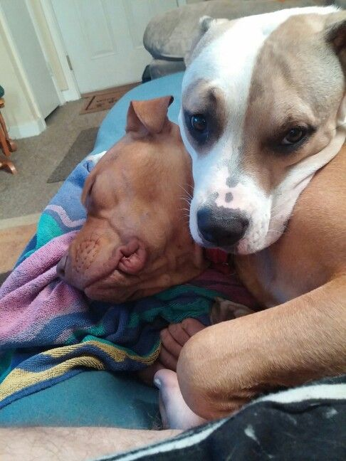 Such a mean breed . Two cute love bugs