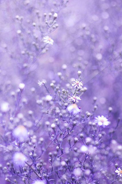 Ma Vie Secrete Lavender Aesthetic Purple Wallpaper Iphone Purple Wallpaper