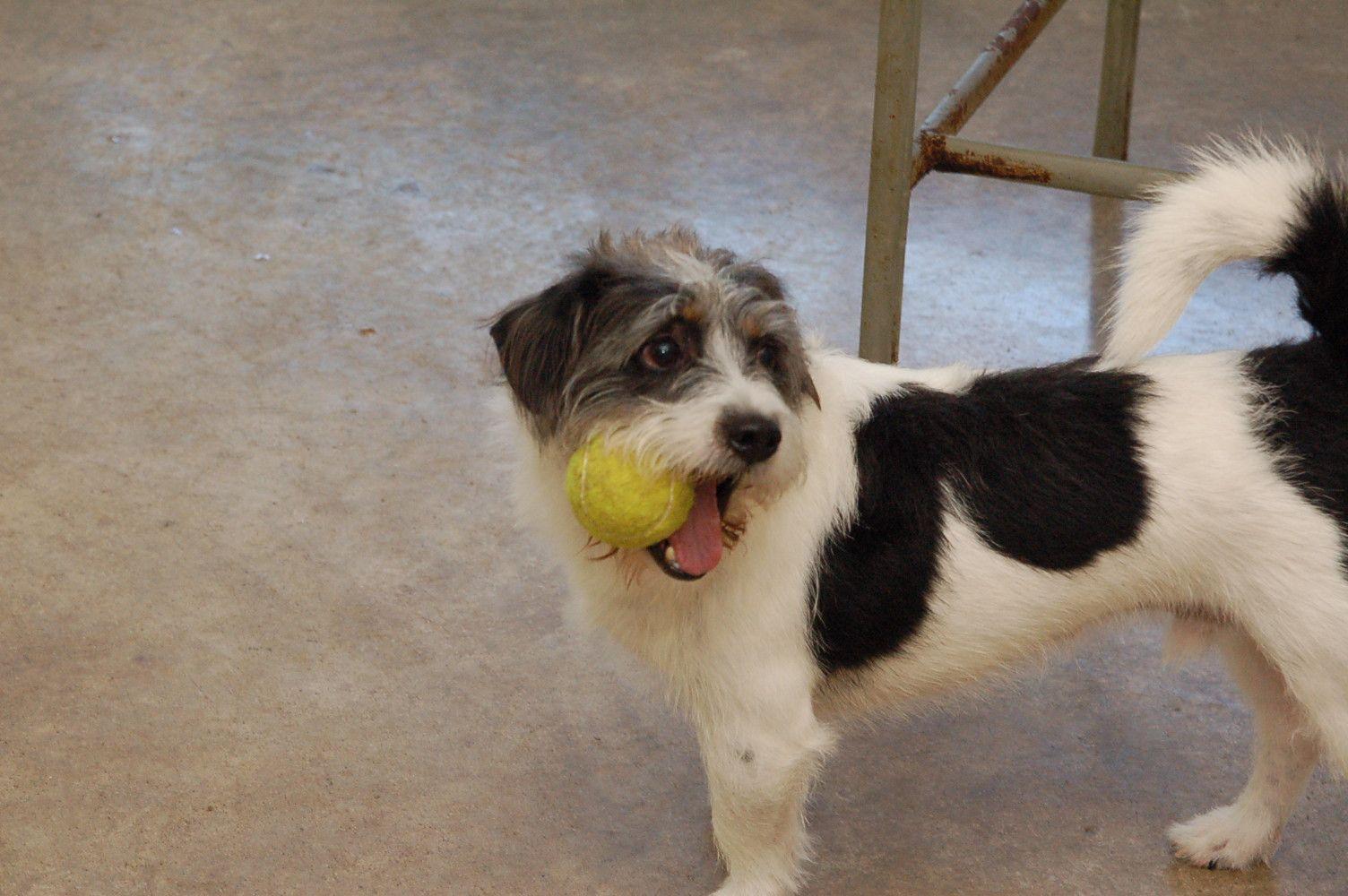 Fletcher Dog spa, Dog care, Dog daycare