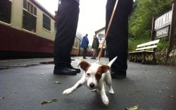 Dog Friendly Attractions in Cornwall - Blog - Best Days Out Cornwall