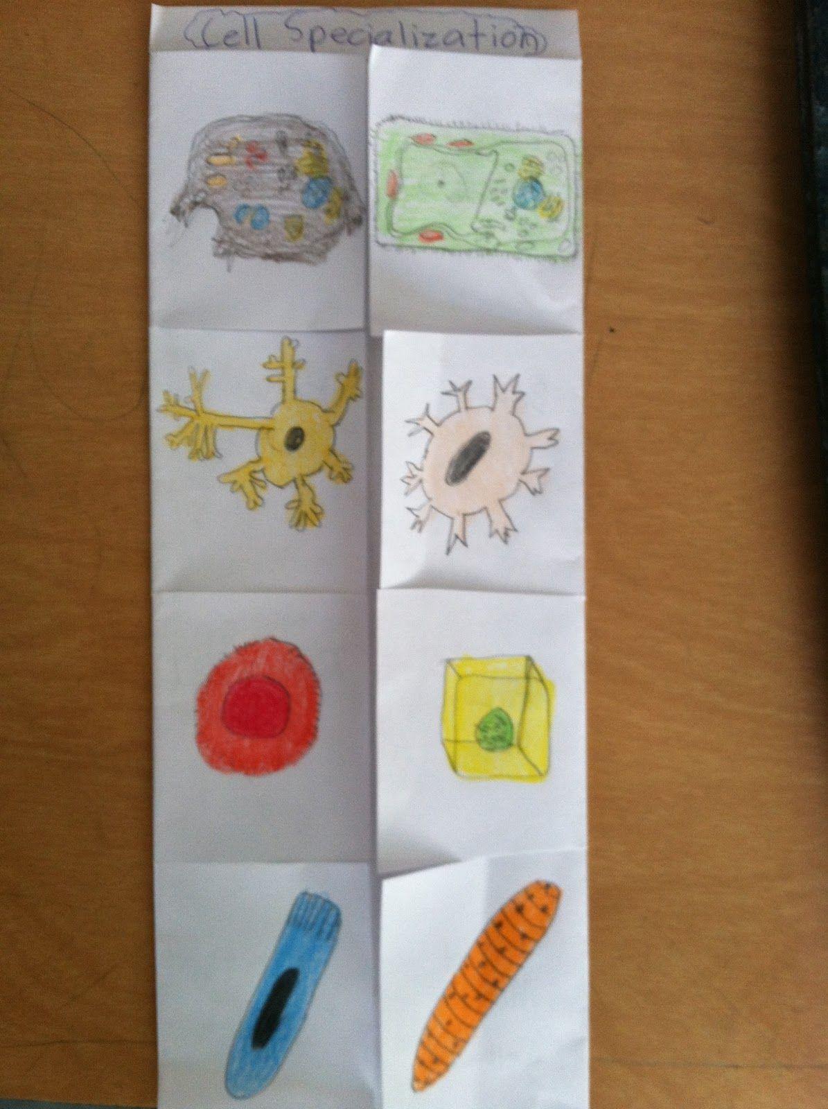 Brainpop Cells A Foldable And A Plea