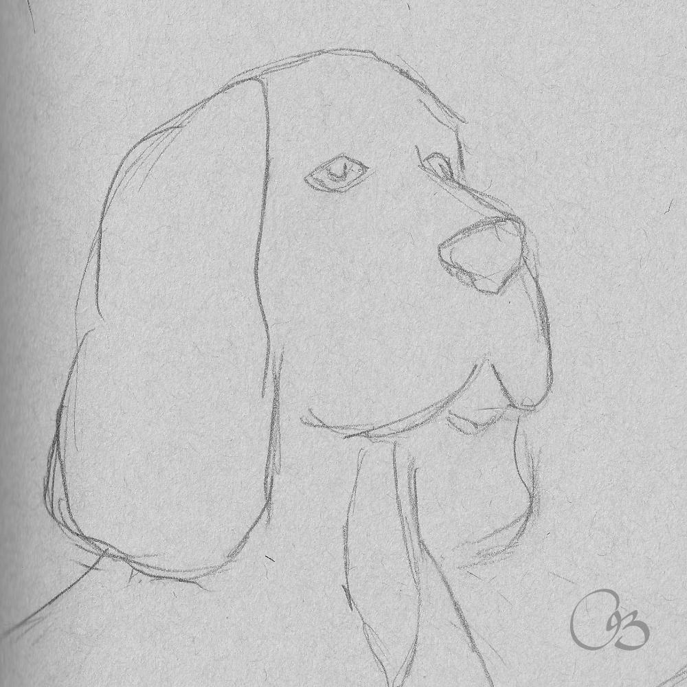 Dog Sketch Drawing Dog Sketch Drawings Drawing Sketches