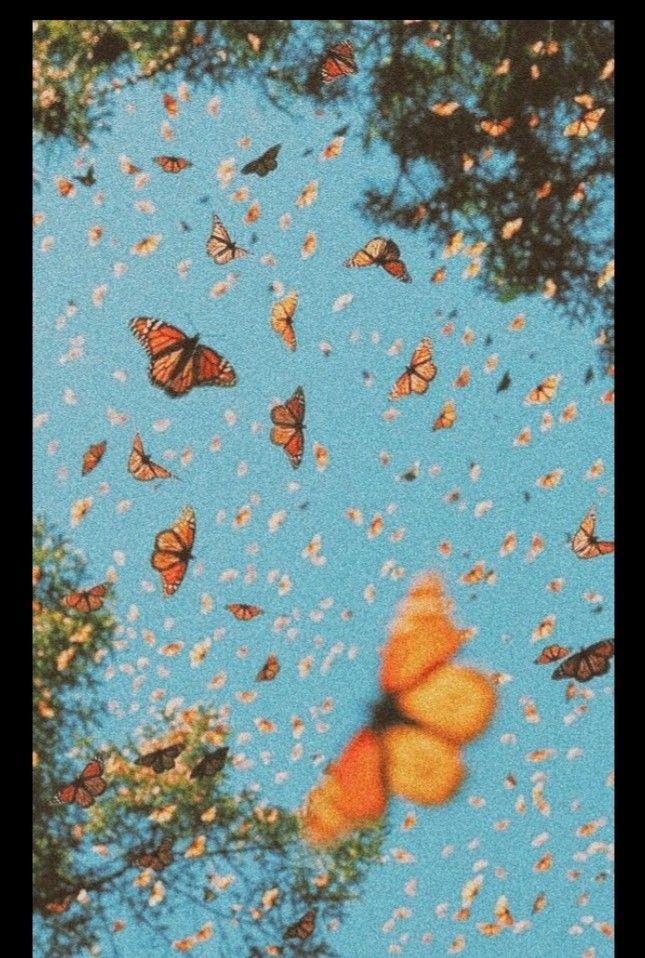 Vsco Aesthetic Retro Vintage Butterflies Luvvv In 2020