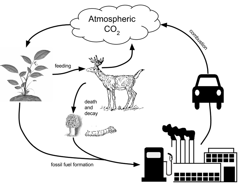 Worksheets The Carbon Cycle Worksheet 27 best images about the carbon cycle on pinterest life cycles model