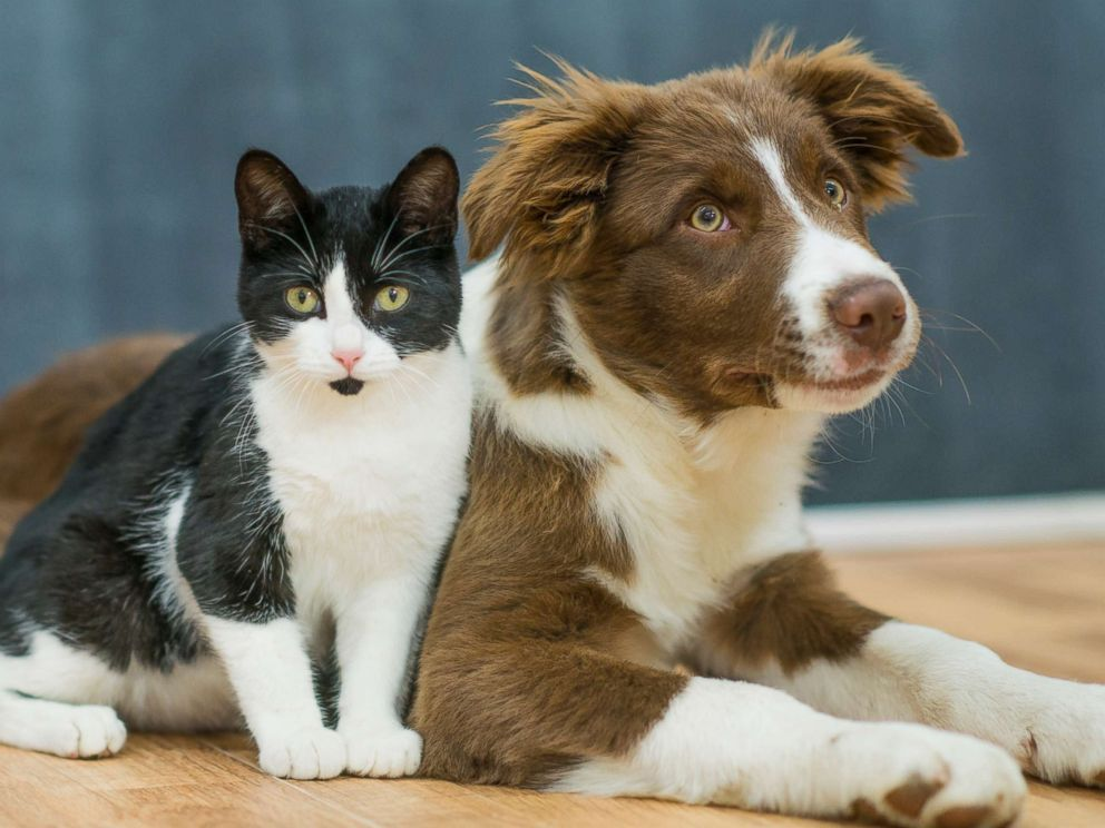 Dogs Are Smarter Than Cats Study Finds Dog Bite