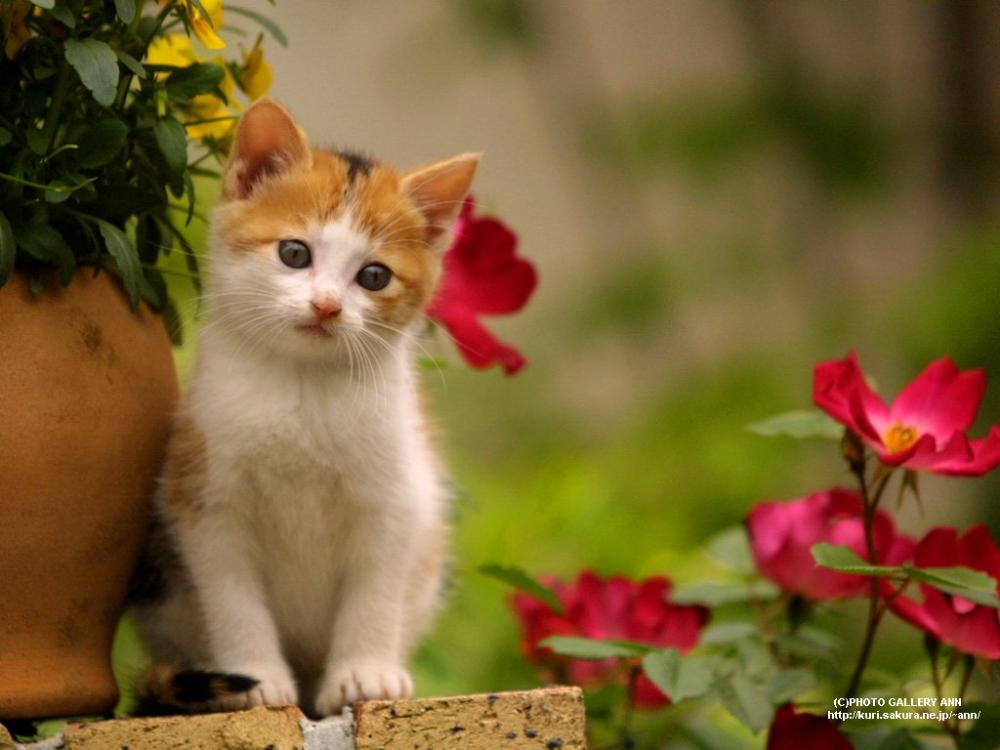 Gambar Kucing Lucu Gambargambar Keren Cute Animals Cats And Kittens Pets
