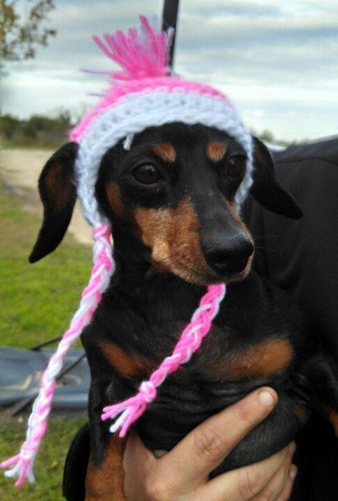 Dachshund Winter Hat Winter Hats Cute Animals Dachshund