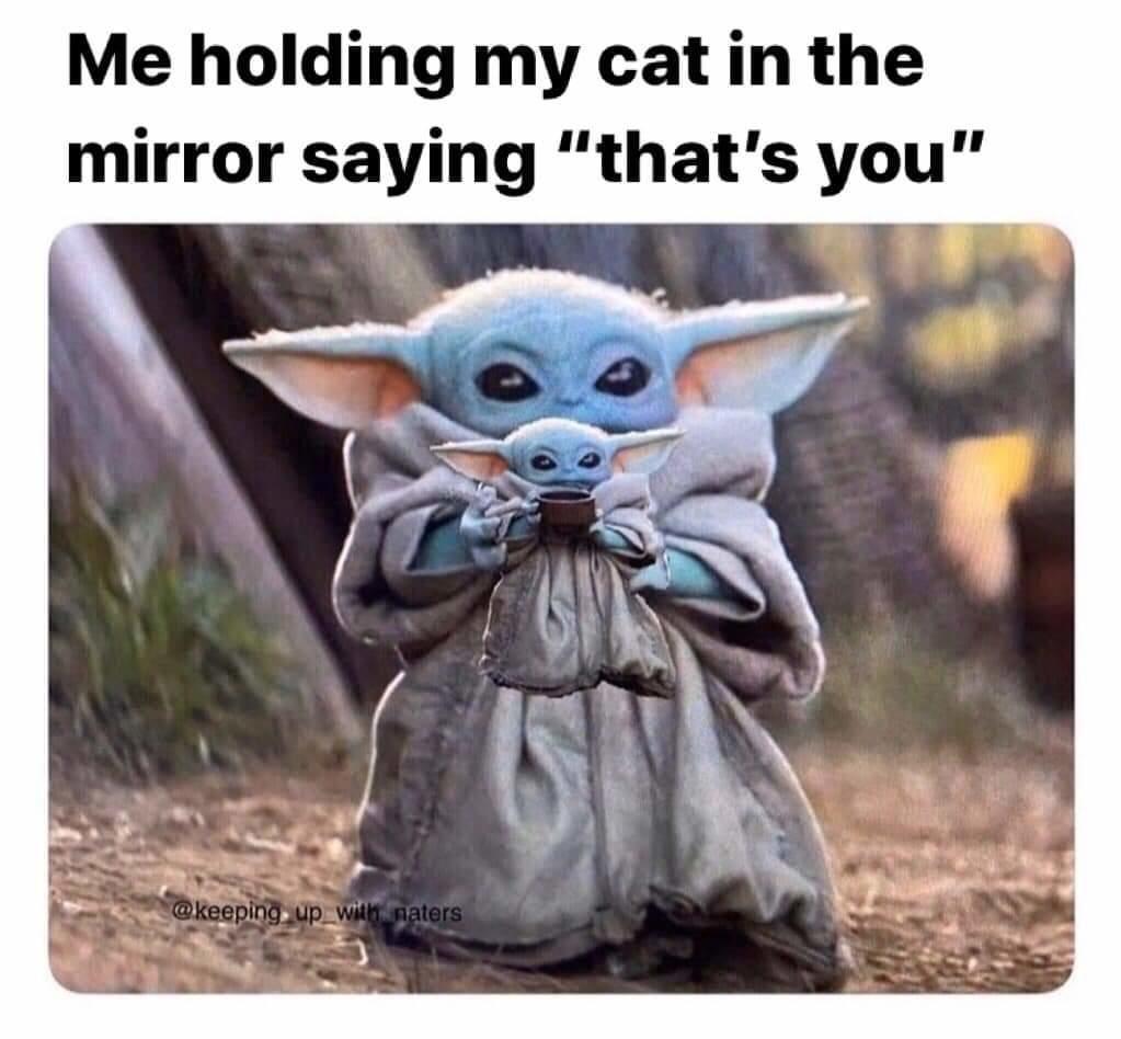 This Meme Is Cuteness Overload What S They Re Not To Love R Babyyoda Baby Yoda Grogu Yoda Funny Yoda Meme Yoda