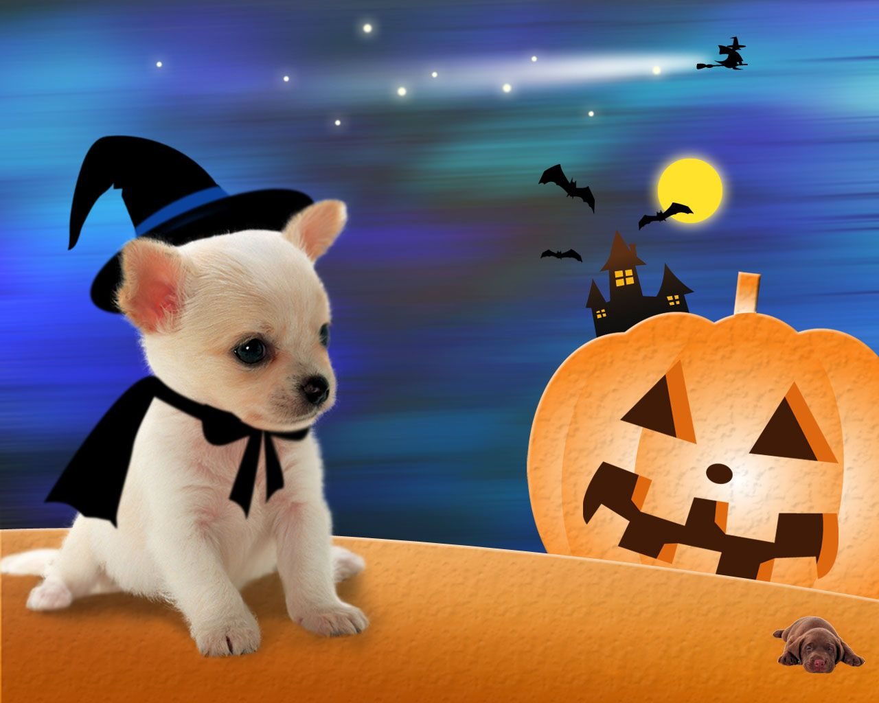 Pin By Leslie Colias On Halloween Halloween Puppy Little Dogs Dog Halloween