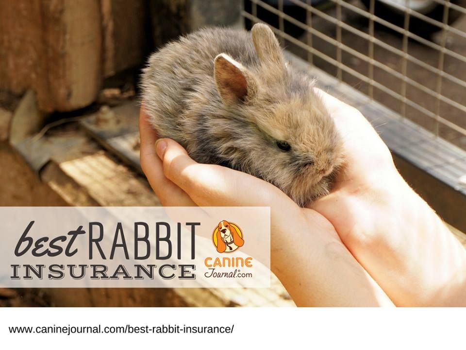 best rabbit insurance  hop your bunny into coverage today