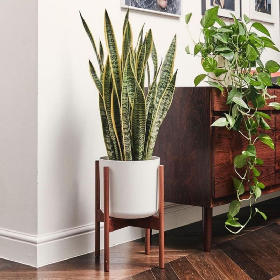 Pin By Wahyu Putra On For The Home Sansevieria Plant Low Light House Plants Bedroom Plants